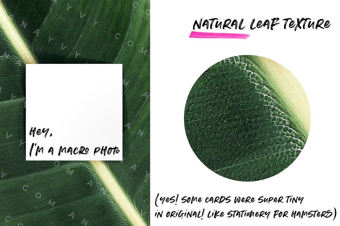 05-urban-jungle-greenery-minimalistic-mockup-poster-din-business-card-presentation-template-
