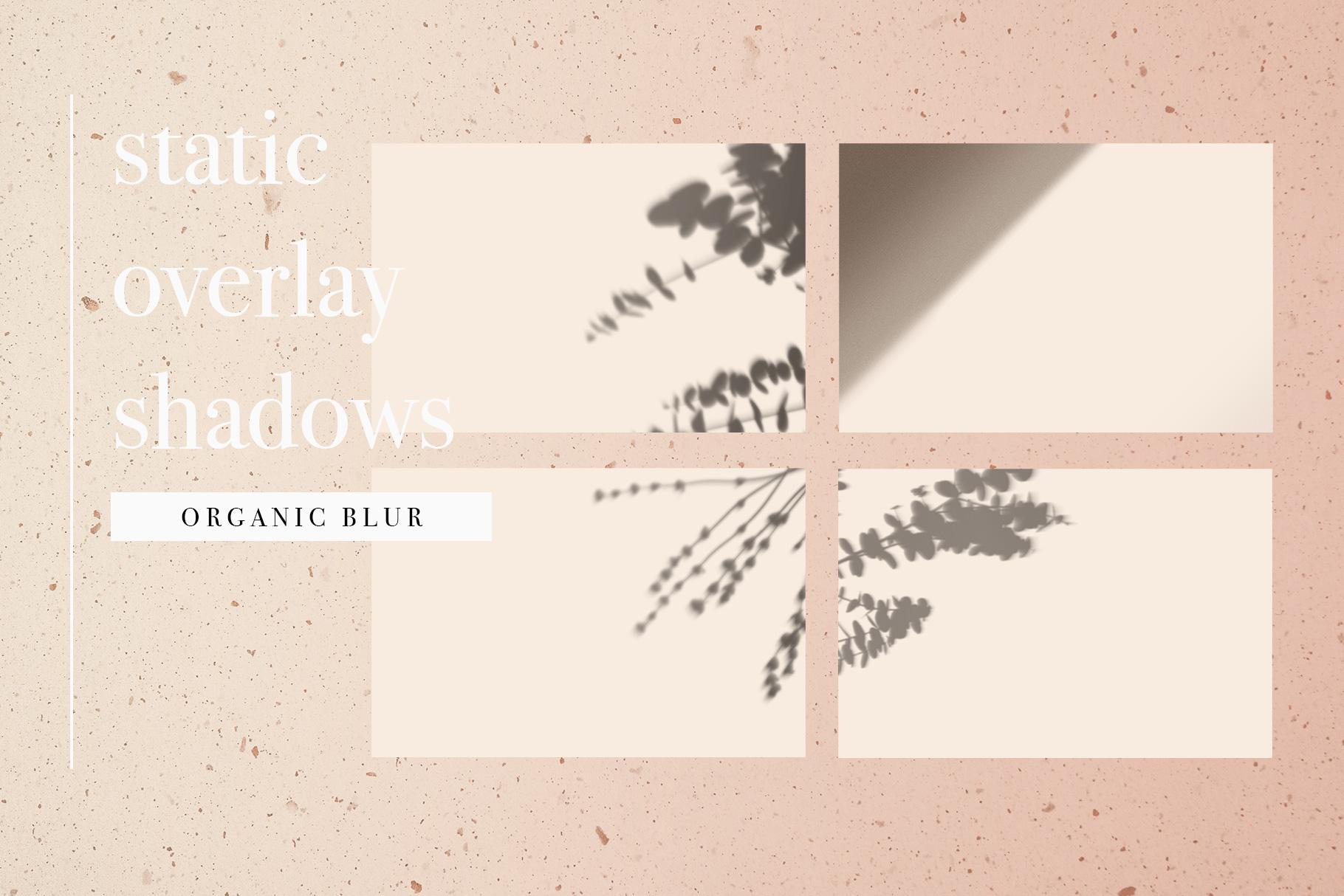 04-organic-shadow-overlay-mockup-palm-leaves-animation